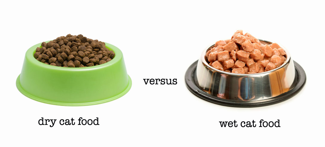 Is Dry Food Better For Cats Than Wet